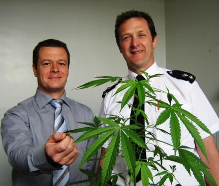 Cannabisbeslag