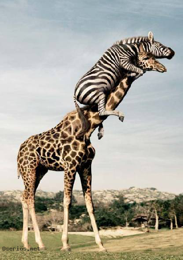 _101_animal-fun.png